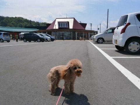 道の駅あさひ駐車場と駅舎と愛犬