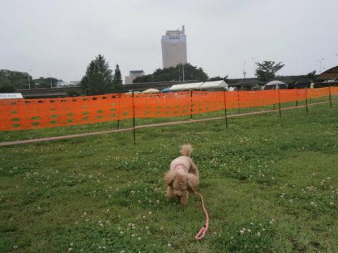 群馬県庁とデスクドッグ競技会