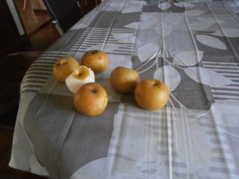 一袋100円の梨