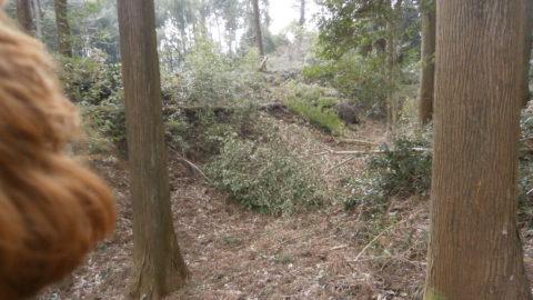 田野城跡主郭と二郭の土塁