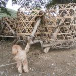 砂籠(ジャカゴ)