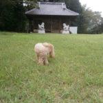 茂木町日枝ノ神神社境内と愛犬