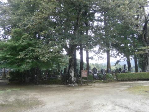 地蔵院菩提樹天然記念物