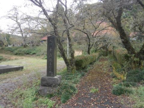 益子町安善寺シダレ桜