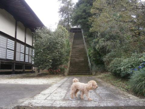 本堂脇の大仏殿の階段
