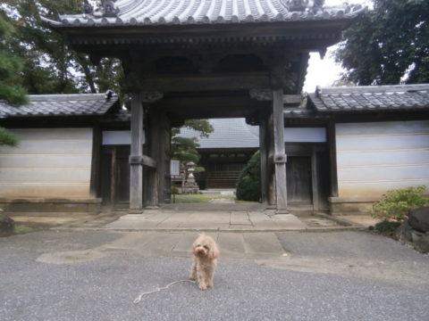 益子町妙伝寺山門