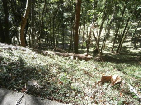 河井八幡神社への道