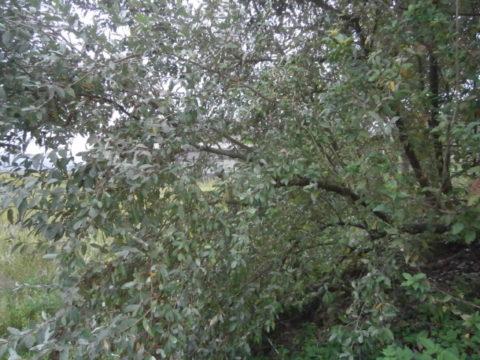 市貝町グミの木1