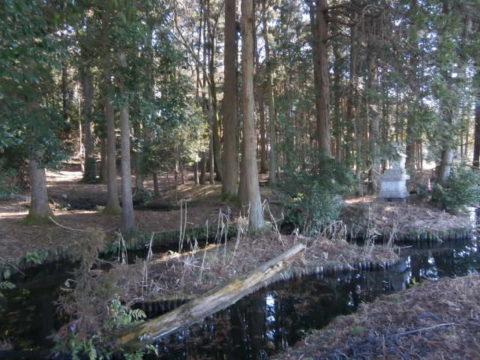 水路のような形状の姥が池2