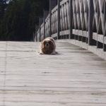 鶴の舞橋ワン
