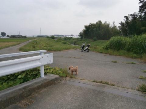 五行川と野元川