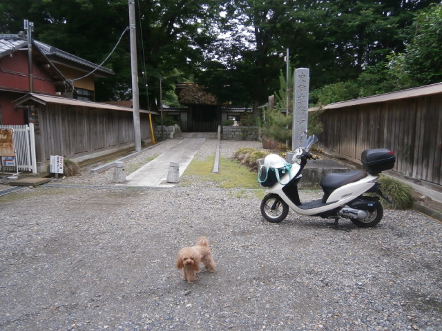 高田山専修寺総門
