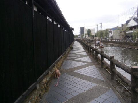 栃木蔵の町板塀と巴波川