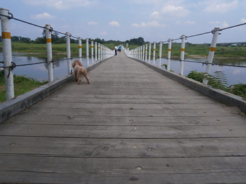 木造の橋と愛犬
