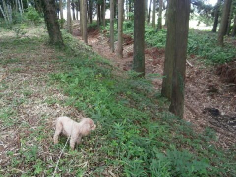中村城跡東側土塁と空堀