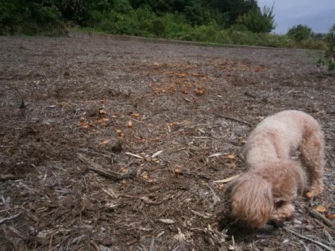 キノコの畑1