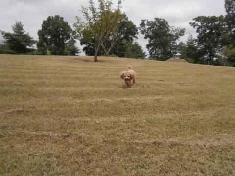 寺内さくら公園芝生の丘