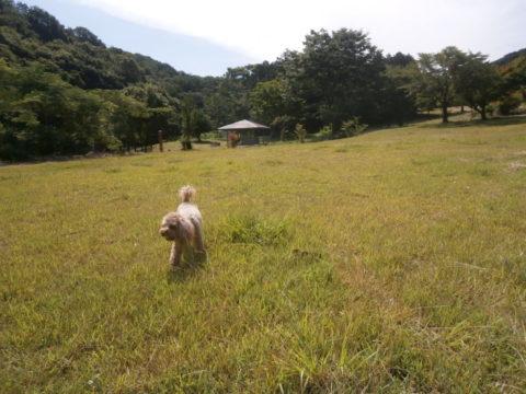 ダム湖の奥には芝生のエリアあり