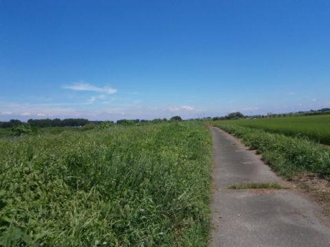 筑西市の五行川の農道