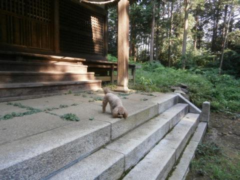 八幡神社お参り