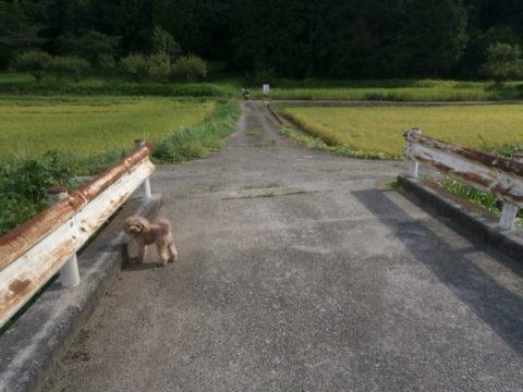 江川の橋から盗掘禁止の看板