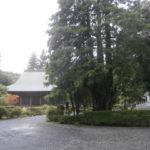 本堂北側の糸桧葉