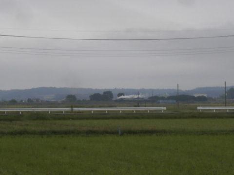 コスモス祭り真岡鉄道SL