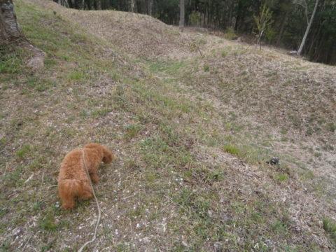 村上城の綺麗に刈り込まれた下草