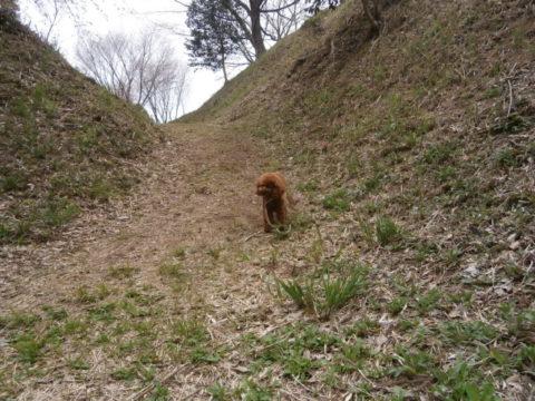 本丸西の堀と本丸の土塁