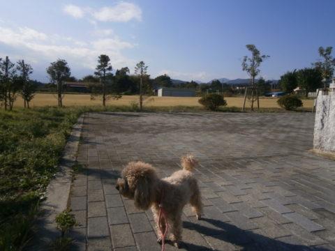 道の駅湧水の郷しおや芝生エリア
