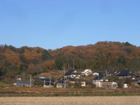 自宅付近の里山紅葉