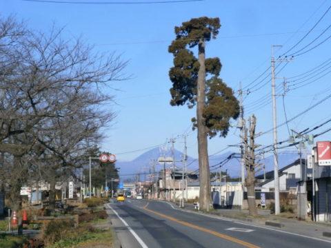 例幣使街道杉並木壬生町