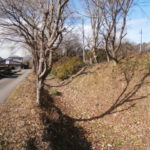 千渡城跡(寶生寺)堀と土塁