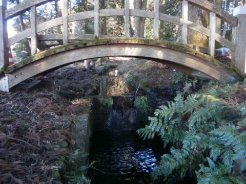 太鼓橋の下に音を立て流れる姥が池